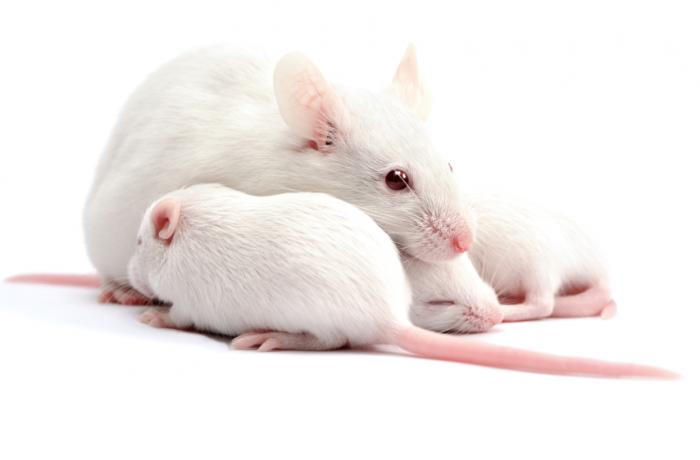 deaf-mice-have-had-their-hearing-successfully-restored-by-gene-therapy